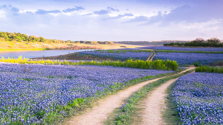 Biking & Kayaking Through the Bluebonnets